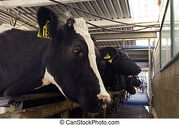 Dairy industry - Cow milking facility