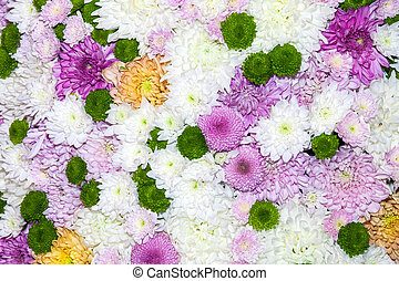 Daisies and chrysanthemums flowers background
