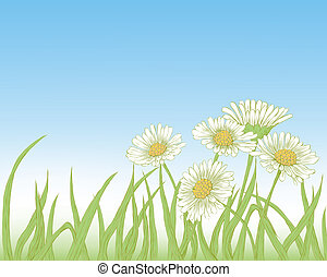 Daisies - Background with fresh green grass