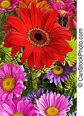 Daisies bouquet