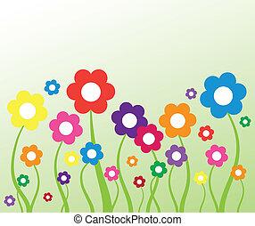 Daisies - Cute pretty colorful spring summer daisies