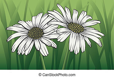Daisies - Illustration of two white daisies with stems and...