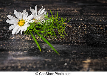 daisies flower with grass on black cracks background, close...