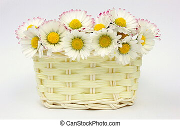 Daisies in a basket