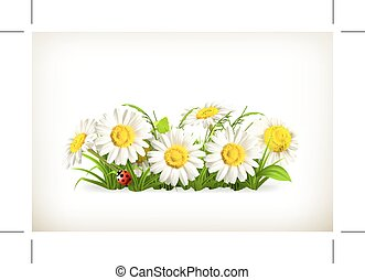 Daisies in green grass