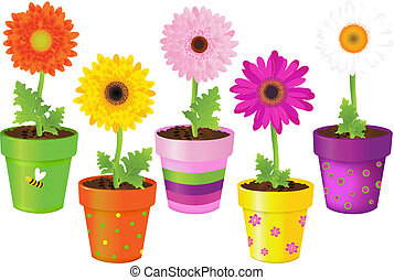 Daisies In Pots With Pictures - Colorful Daisies In Pots...