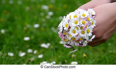 Daisies in the hands