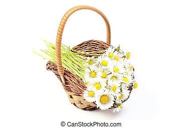 Daisies in wicker basket. White background