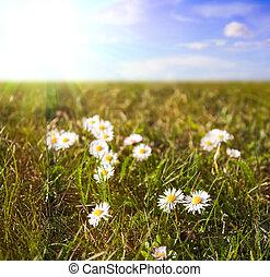 daisies, ind, en, felt