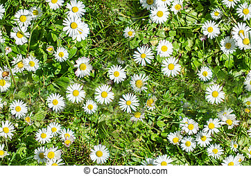 daisies on a green meadow seamless