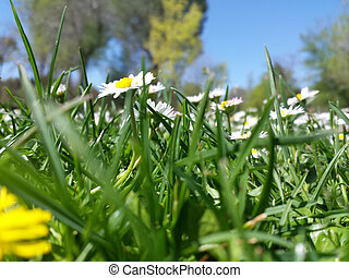 daisies on a green meadow