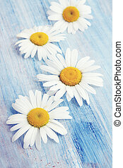 daisies on an blue board