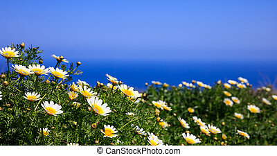 Daisies on the background of blue sea and sky