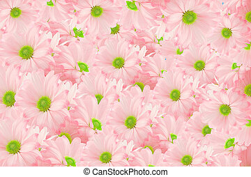 daisy background - pink daisies piled up in a bunch