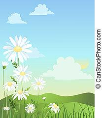daisy design