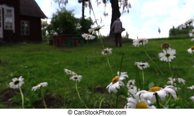 farmer man mow lawn - Daisy flower blooms move in wind and...