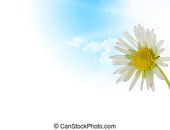 daisy flower, floral design spring season