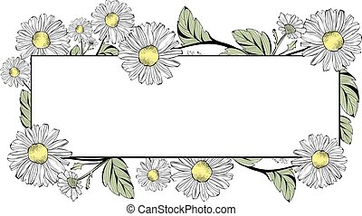 Daisy Flower Border With Copyspace Over White