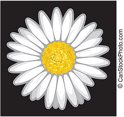 Daisy flower isolated on black