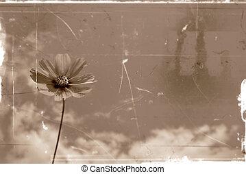 Daisy flower old photo