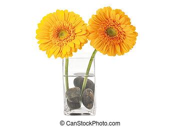 daisy flower on a glass