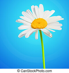 Daisy flower vector background. Chamomile blossom illustration