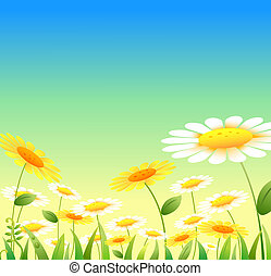 yellow and white flowers under blue sky, used as background