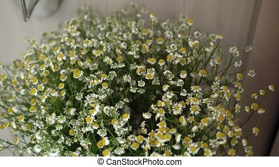Daisy flowers bouquet - Daisy small flowers bouquet indoors
