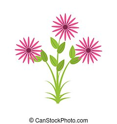 daisy flowers bunch flora