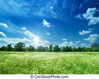 Daisy flowers field under the blue skies