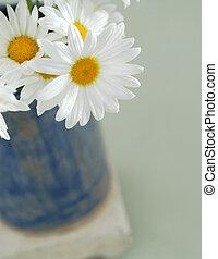Daisy flowers in a little blue vase.