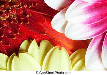 Daisy Flowers in Detail