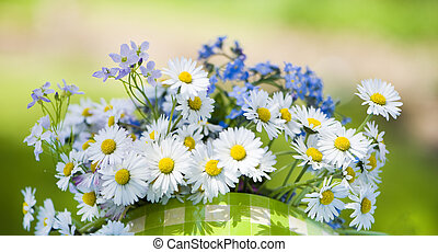 Daisy flowers in nature background