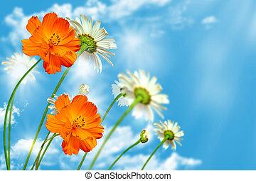 daisy flowers on blue sky background