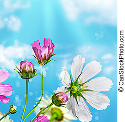 daisy flowers on blue sky background