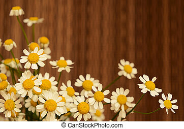 Daisy flowers on brown background