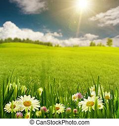 Daisy flowers on the sunny meadow under the bright summer sun