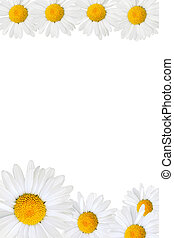Daisy frame - Frame made from daisy over yellow background