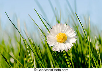 close up of a daisy in a sunny day