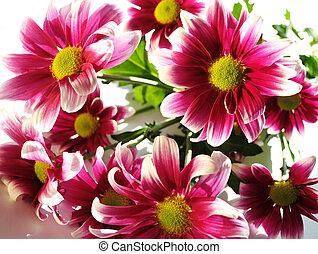 daisy in the sunny day