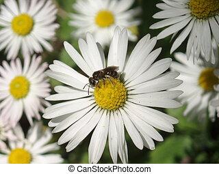 Daisy & Little Bee