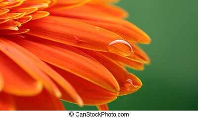Daisy macro - beautiful flower