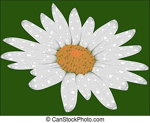 daisy on a green background