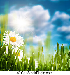 Daisy on the meadow, abstract natural backgrounds for your design