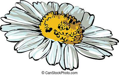 daisy wheel picture of nature flower sketch