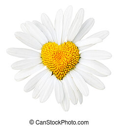 Daisy with heart in center isolated over white background