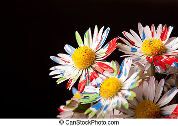 daisys, colorfull