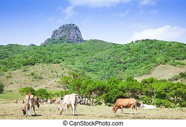 dajianshan mountain ranch. kenting national park in taiwan