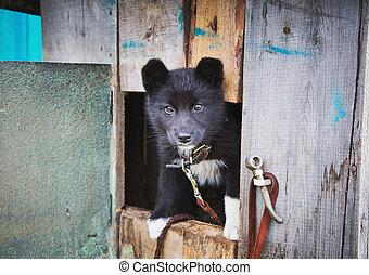dakloos, puppy, in, een, schuilplaats, voor, dogs.