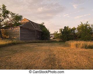 A summer morning in a South Dakota farmyard